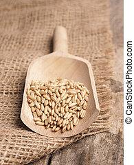 Peeled oats in a wooden shovel