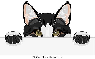 Peeping funny cat. Vector illustration