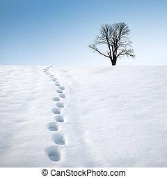 pegadas, em, neve, e, árvore