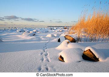pegadas, neve