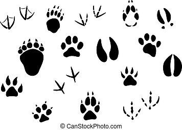 pegadas, trilhas, animal