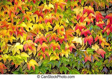 peint, feuilles, automnal