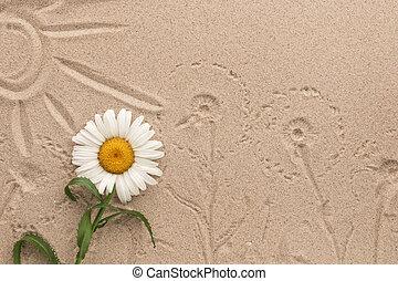 peint, soleil, et, camomile, caractères, sur, les, sand., beau, picture.
