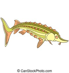 peixe, caricatura, esturjão