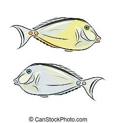 peixe, desenho, esboço, seu