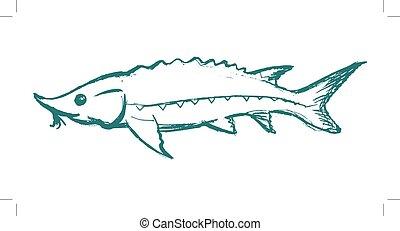 peixe, freshwater, esturjão