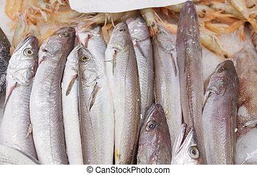 peixe, gelo, tenda, esfriou, fresco, hakes, mercado