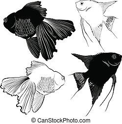 peixe, jogo, aquário