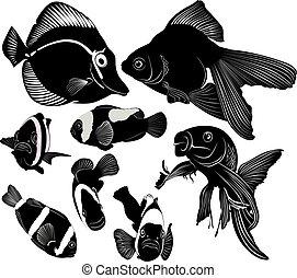 peixe, marinho, aquário