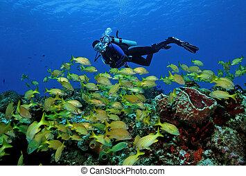 peixe, mergulhador, escola
