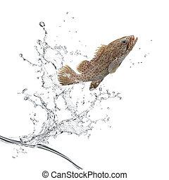 peixe, pular