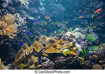 peixe tropical, água