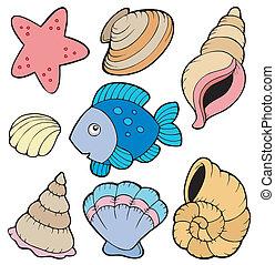 peixe, vário, cobrança, conchas