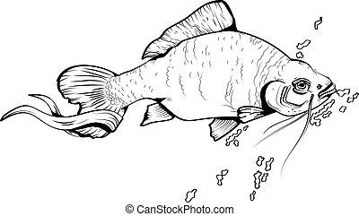 peixe, vetorial, esboço, ilustração
