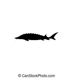 peixe, vetorial, ilustração, esturjão, silhouette.
