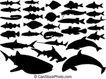 peixe, vetorial, jogo