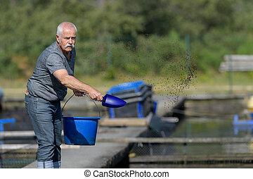 peixes, alimentação, homem