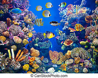 peixes, aquário, coloridos