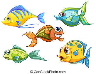 peixes, cinco, coloridos