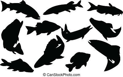 peixes, cobrança