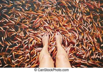 peixes, massagem