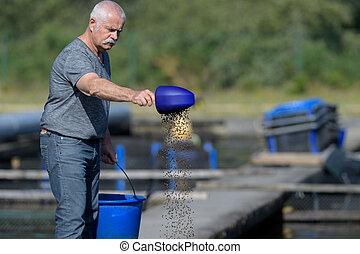 peixes, sênior, alimentação, trabalhador