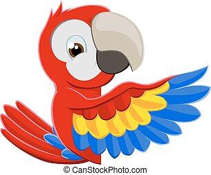 pekande, papegoja, fågel