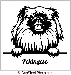 Pekingese - Peeking Dogs - breed face head isolated on white