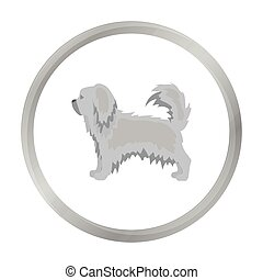 Pekingese vector icon in monochrome style for web