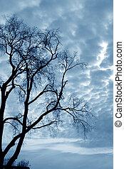 pelado, árvores
