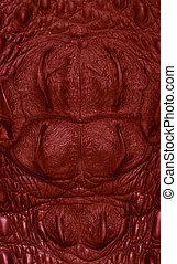 pele, textura, crocodilo, experiência., vermelho, freshwater