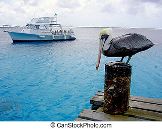 pelican and dive boat