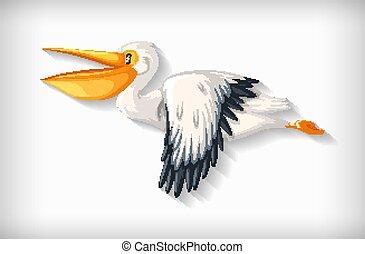 Pelican bird flying on white background