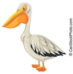 Pelican bird with white feather illustration