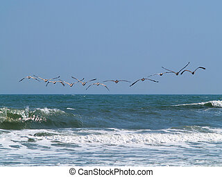 Pelican Butts - Eleven pelicans flying away in formation ...
