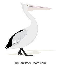 Pelican - An adult pelican. The illustration on a white...