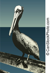 Pelican - This is a vector illustration of a lager pelican...