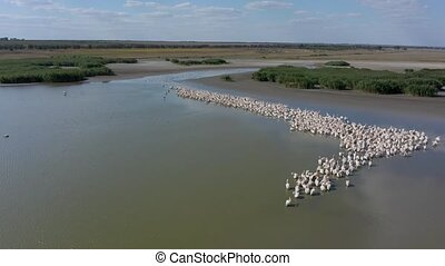 Pelican colony at Besalma lake in Moldova - Aerial view to ...