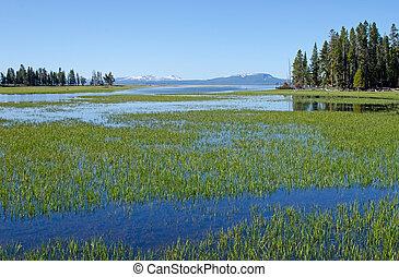 Pelican Creek, Yellowstone National Park, Wyoming, USA -...