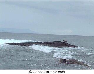 Pelican flying along Galapagos Islands