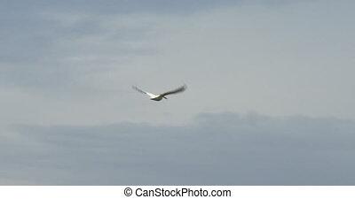 Pelican flying high in the sky