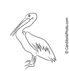 pelican graphic line, vector,