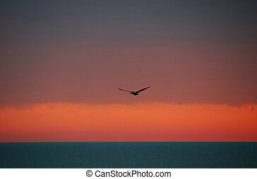 Pelican In Flight Over Sanibel Florida Ocean Sunset