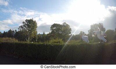 Pelican in sunshine in nature