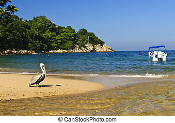 Pelican on beach in Mexico