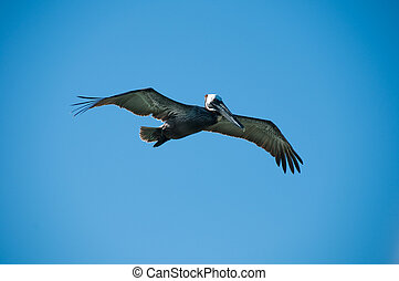 Pelican bird with a sky as a background
