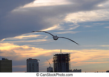 Pelican Sunset - A pelican flying into the sunset with a ...