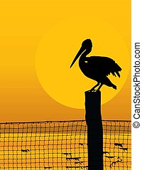 Black silhouette of a pelican against a sunrise/sunset