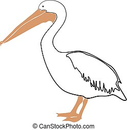 Pelican vector illustration