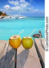 pelicano, caraíbas, coquetel, cocos, fresco, natação